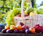fruit-picking-2