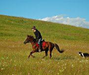 horse-riding-portfolio1